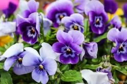 Beautiful Spring Panises