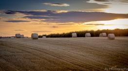 Autumn Harvest - Stoke Dry