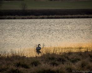 Sunset - Stoke Dry
