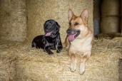 G ~ German Shepherd Tess L ~ Labrador Retriever Lottie